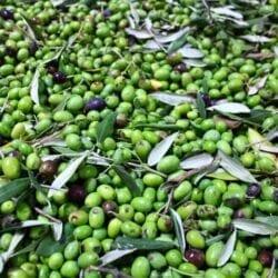 Olio extra vergine di oliva BIOLOGICO – 0,25 L