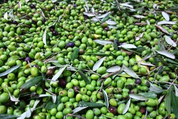 Olio extra vergine di oliva – 0,75 L