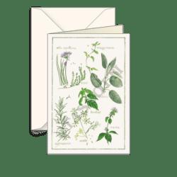 Biglietti auguri avorio – Erbe aromatiche