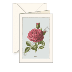 Biglietti auguri avorio – Rosa