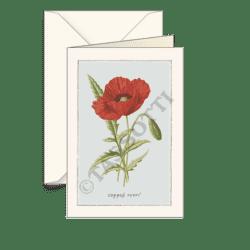 Biglietti auguri avorio – Anemone variata