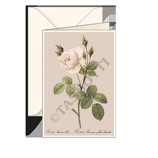 Biglietti auguri avorio – Rosa bianca