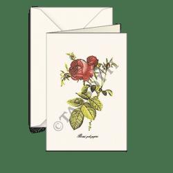 Biglietti auguri – Rosa pink