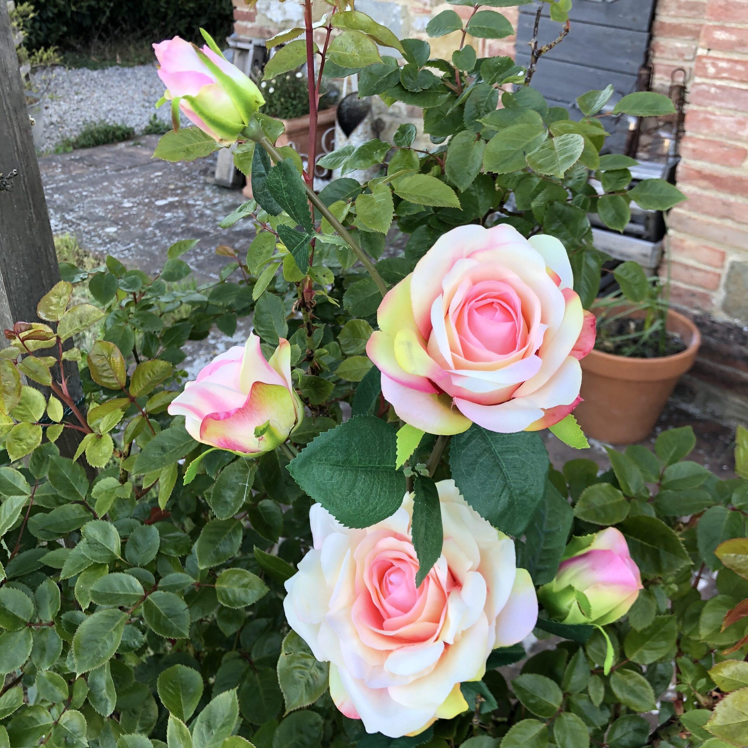Tralcio di rose – Rosa/Verde