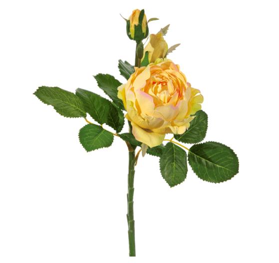 Rosa Piaget con 2 boccioli – Giallo