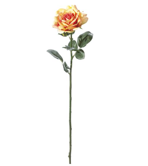 Rosa inglese maxi – Arancio