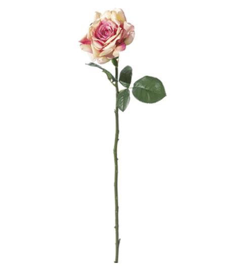 Rosa inglese maxi – Rosa