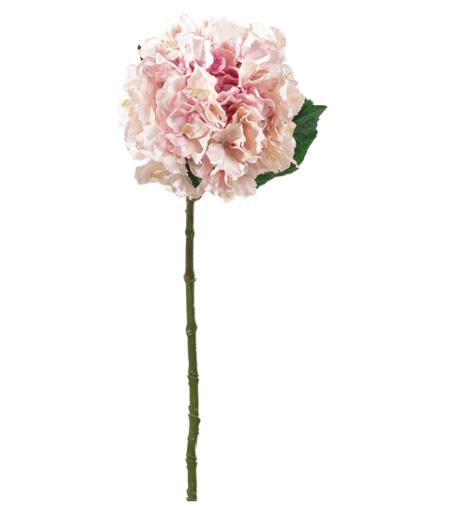 Ortensia Aida – Rosa