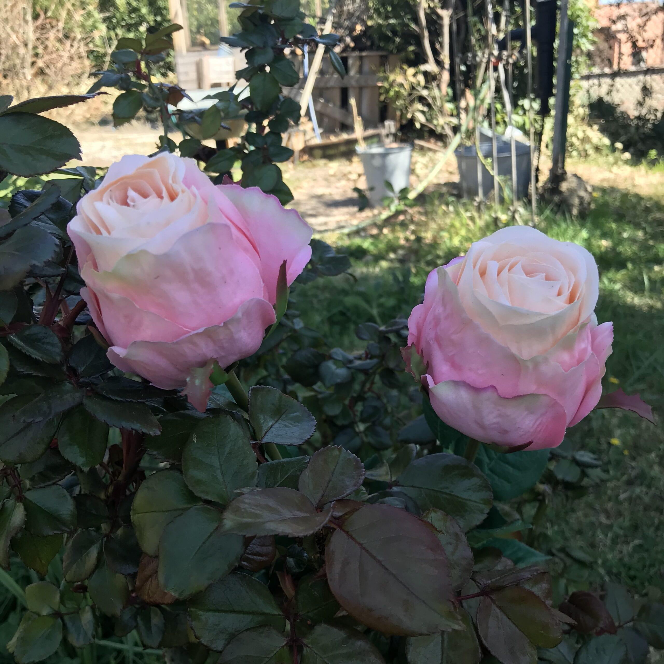 Bocciolo di rose maxi – Rosa
